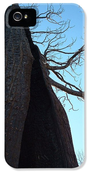 Burnt iPhone 5 Cases - Burned Trees 7 iPhone 5 Case by Naxart Studio