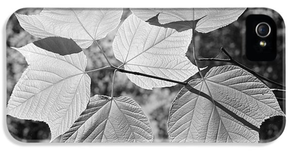Chlorophyll iPhone 5 Cases - Canopy of Leaves iPhone 5 Case by Luke Moore