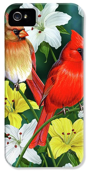 Decorative iPhone 5 Cases - Cardinal Day 2 iPhone 5 Case by JQ Licensing