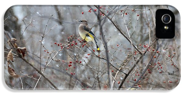 Cedar Wax Wing 3 IPhone 5 / 5s Case by David Arment
