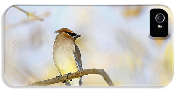 Cedar Waxwing On Yellow And Blue IPhone 5 / 5s Case by Susan Gary