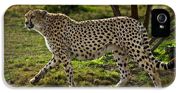 Cheetah  IPhone 5 / 5s Case by Garry Gay