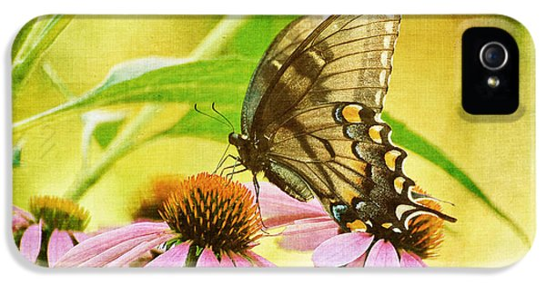 Cone Flowers And Butterflies iPhone 5 Cases - Child of Sun and Summer iPhone 5 Case by Lois Bryan