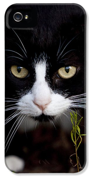 Black Cat iPhone 5 Cases - Chloe iPhone 5 Case by Dustin K Ryan
