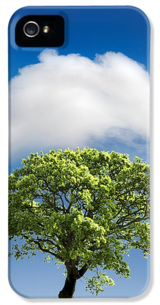 Growth iPhone 5 Cases - Cloud Cover iPhone 5 Case by Mal Bray