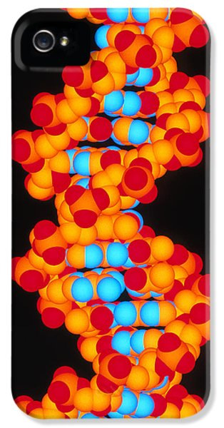 Molecular Graphic iPhone 5 Cases - Computer Artwork Of A Segment Of Beta Dna iPhone 5 Case by Pasieka