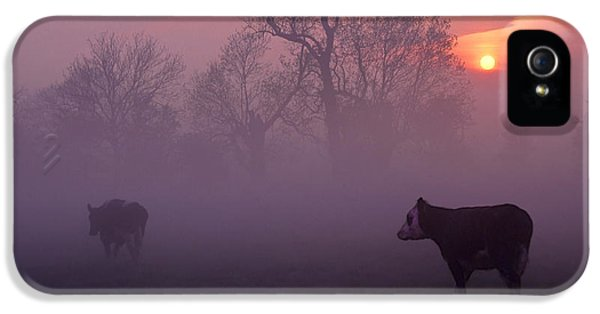 Pink Sunrise iPhone 5 Cases - Cows At Sunrise iPhone 5 Case by Meirion Matthias