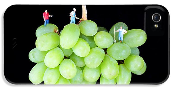 Anti-gravity iPhone 5 Cases - Cultivation on grapes iPhone 5 Case by Paul Ge
