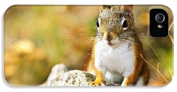 Cute Red Squirrel Closeup IPhone 5 / 5s Case by Elena Elisseeva