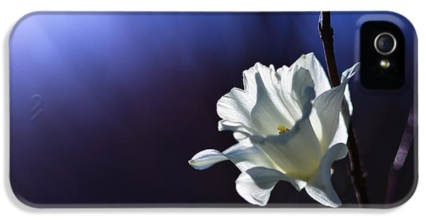 White Flowers iPhone 5 Cases - Daffodil Light iPhone 5 Case by Lori Coleman