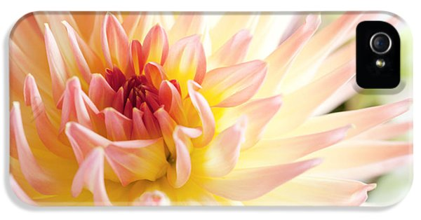 Dewdrop iPhone 5 Cases - Dahlia Flower 01 iPhone 5 Case by Nailia Schwarz