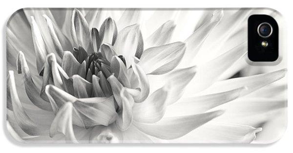 Dewdrop iPhone 5 Cases - Dahlia Flower 02 iPhone 5 Case by Nailia Schwarz