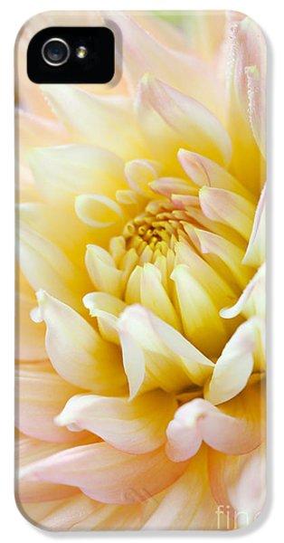 Dewdrop iPhone 5 Cases - Dahlia Flower 03 iPhone 5 Case by Nailia Schwarz