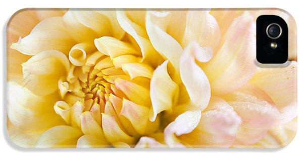 Dewdrop iPhone 5 Cases - Dahlia Flower 08 iPhone 5 Case by Nailia Schwarz