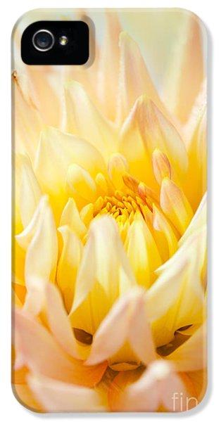Dewdrop iPhone 5 Cases - Dahlia Flower 10 iPhone 5 Case by Nailia Schwarz