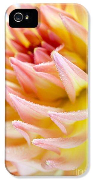 Water Drop iPhone 5 Cases - Dahlia Flower 13 iPhone 5 Case by Nailia Schwarz