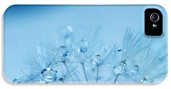 Water Drop iPhone 5 Cases - Dandelion Bouquet iPhone 5 Case by Rebecca Cozart