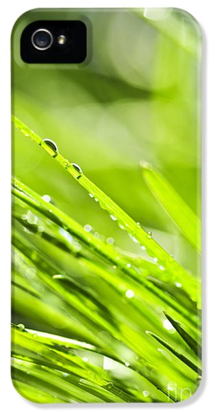 Dewdrop iPhone 5 Cases - Dewy green grass  iPhone 5 Case by Elena Elisseeva
