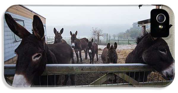 Donkey iPhone 5 Cases - Donkeys iPhone 5 Case by Dawn OConnor
