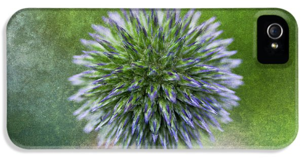 Echinops iPhone 5 Cases - Dream Thistle iPhone 5 Case by Venetta Archer