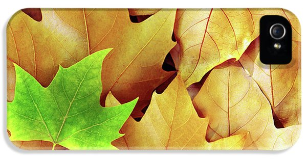 Environment Design iPhone 5 Cases - Dry Fall Leaves iPhone 5 Case by Carlos Caetano