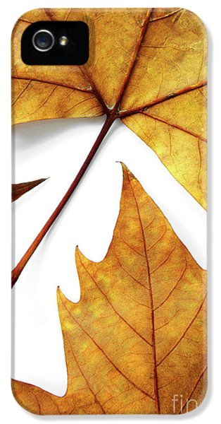 Environment Design iPhone 5 Cases - Dry Leafs iPhone 5 Case by Carlos Caetano