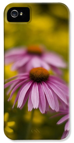 Echinacea iPhone 5 Cases - Echinacea Dreamy iPhone 5 Case by Mike Reid