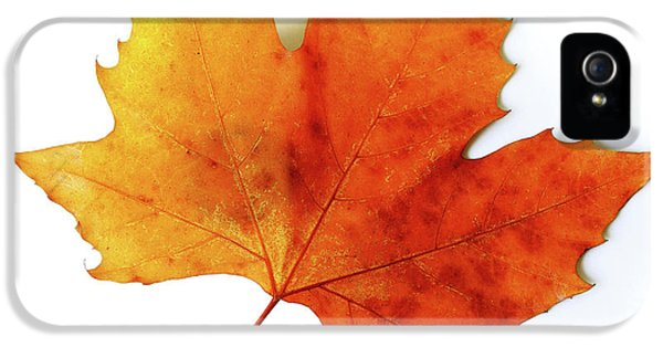 Environment Design iPhone 5 Cases - Fall Leaf iPhone 5 Case by Carlos Caetano