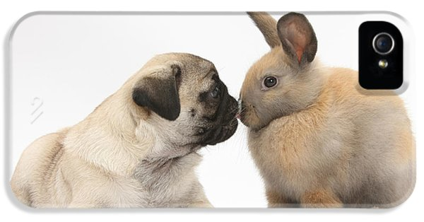 Young Rabbit iPhone 5 Cases - Fawn Pug Pup And Young Rabbit iPhone 5 Case by Mark Taylor