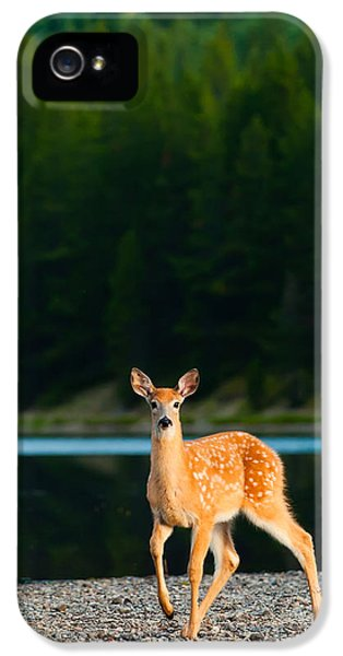 Proud iPhone 5 Cases - Fawn iPhone 5 Case by Sebastian Musial