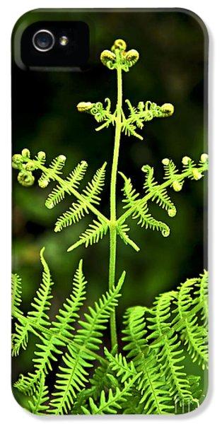 Fern iPhone 5 Cases - Fern leaf iPhone 5 Case by Elena Elisseeva