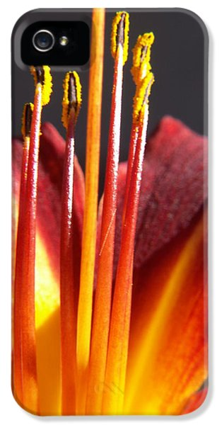Florals iPhone 5 Cases - Fire Lily iPhone 5 Case by Amy Fose