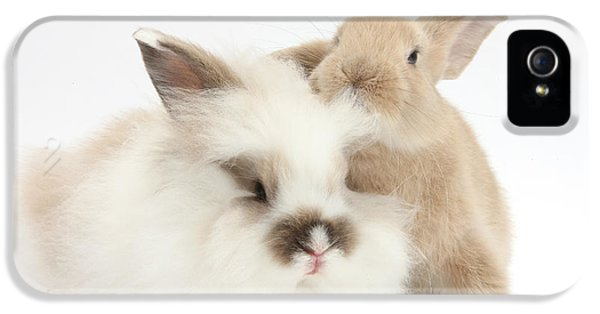 Young Rabbit iPhone 5 Cases - Fluffy And Smooth Young Rabbits iPhone 5 Case by Mark Taylor