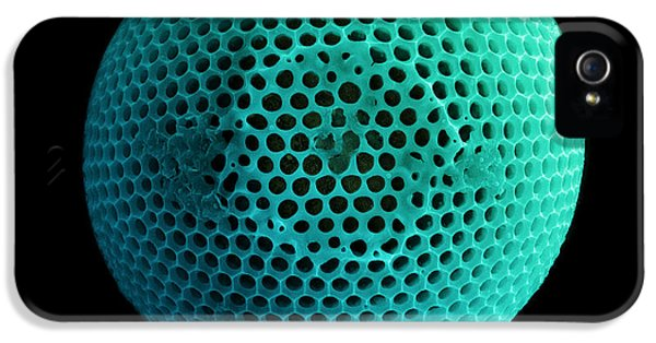 Diatom iPhone 5 Cases - Fossil Diatom, Sem iPhone 5 Case by Ted Kinsman