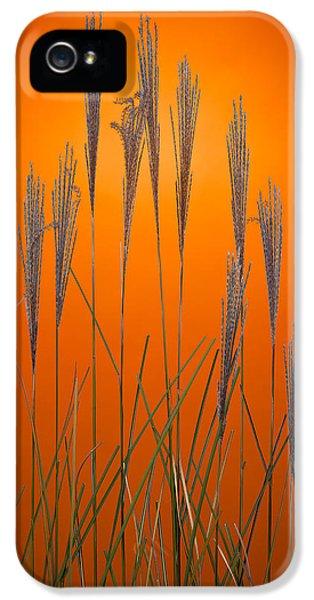 Tangerine iPhone 5 Cases - Fountain Grass In Orange iPhone 5 Case by Steve Gadomski