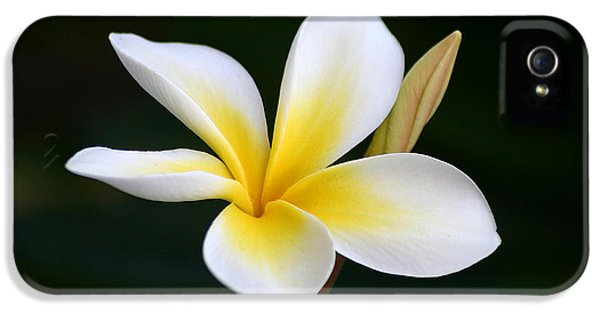 Plumerias iPhone 5 Cases - Fragrant Hawaiian Plumeria Maui iPhone 5 Case by Pierre Leclerc Photography