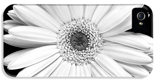 Florals iPhone 5 Cases - Gerbera Daisy iPhone 5 Case by Marilyn Hunt