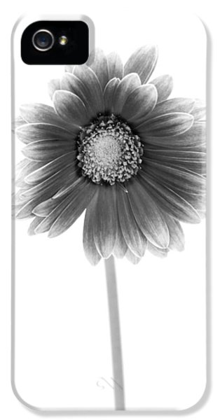 Gerbera In Black And White IPhone 5 / 5s Case by Sebastian Musial