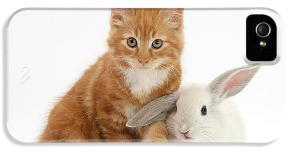 Young Rabbit iPhone 5 Cases - Ginger Kitten And Young White Rabbit iPhone 5 Case by Mark Taylor
