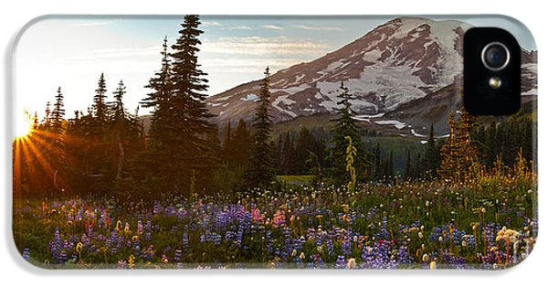 Lupin iPhone 5 Cases - Golden Meadows of Wildflowers iPhone 5 Case by Mike Reid