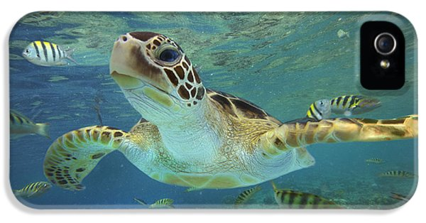 Outdoors iPhone 5 Cases - Green Sea Turtle Chelonia Mydas iPhone 5 Case by Tim Fitzharris