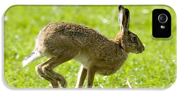 Jackrabbit iPhone 5 Cases - Hare Hopping In The Grass iPhone 5 Case by John Short