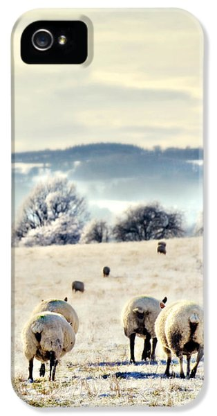 Ewe iPhone 5 Cases - Heading Home iPhone 5 Case by Meirion Matthias