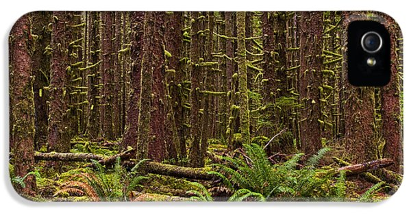 Forrest iPhone 5 Cases - Hoh Rainforest iPhone 5 Case by Mark Kiver