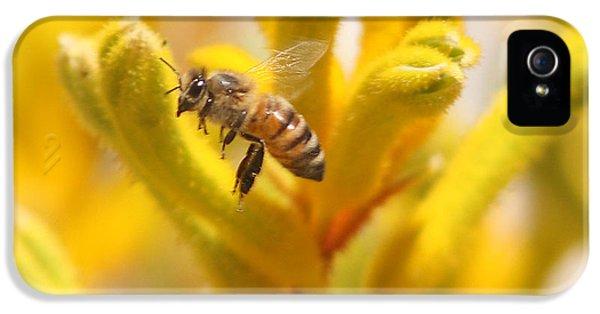 Honey Bee In Flight Over Yellow Kangaroo Paw Flowers IPhone 5 / 5s Case by Kenny Bosak