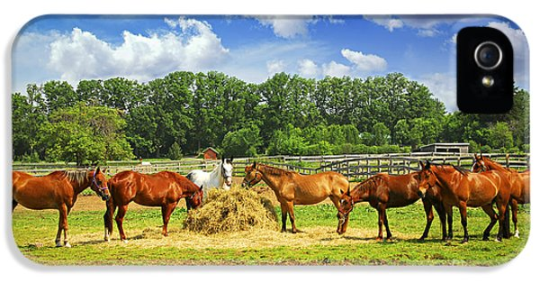 Feeding iPhone 5 Cases - Horses at the ranch iPhone 5 Case by Elena Elisseeva