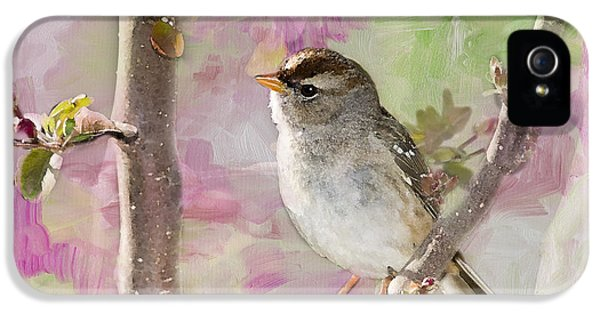 Passer Domesticus iPhone 5 Cases - House Sparrow iPhone 5 Case by Betty LaRue