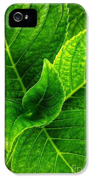 Chlorophyll iPhone 5 Cases - Hydrangea Leaves iPhone 5 Case by Carlos Caetano
