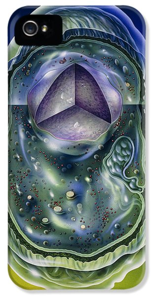 Microbiology iPhone 5 Cases - Illustration Of Structures Of A Typical B iPhone 5 Case by John Bavosi