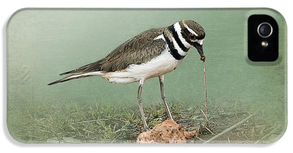 Killdeer And Worm IPhone 5 / 5s Case by Betty LaRue